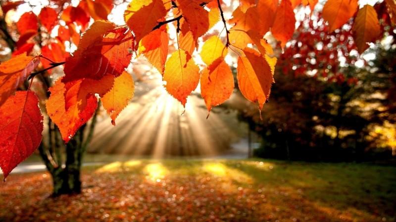 autumn-sunlight-800x450